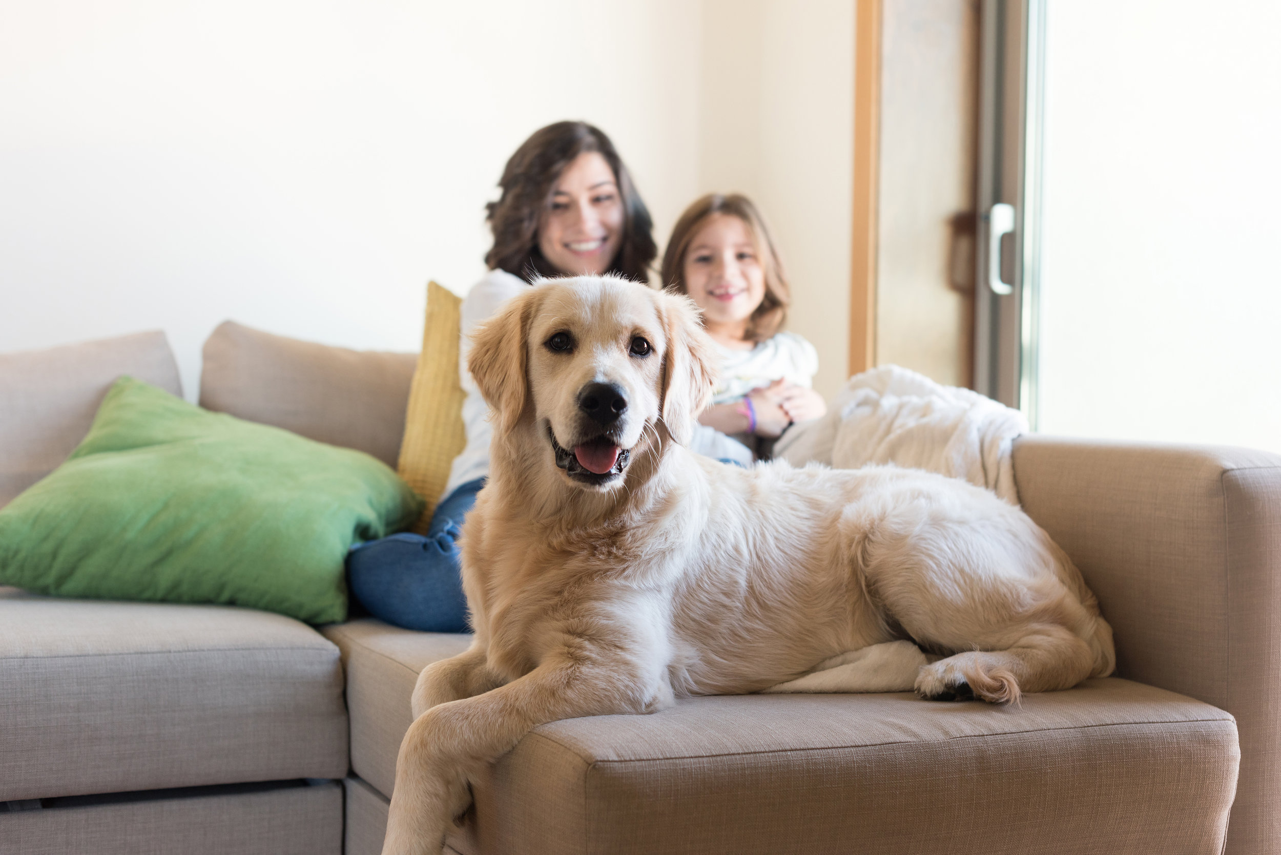 Call Our Office At 720.350.4353 - We can talk more specifically about your pet's health and how to schedule a free consultation.