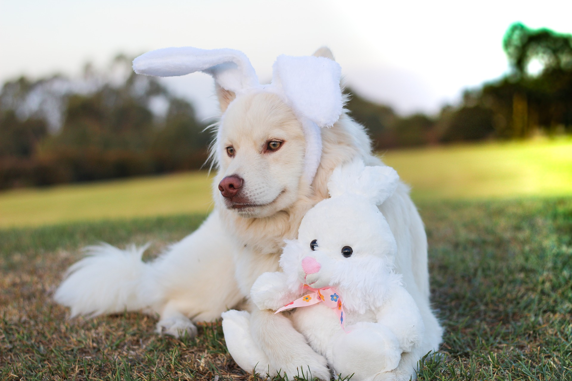 puppy bunny.jpg