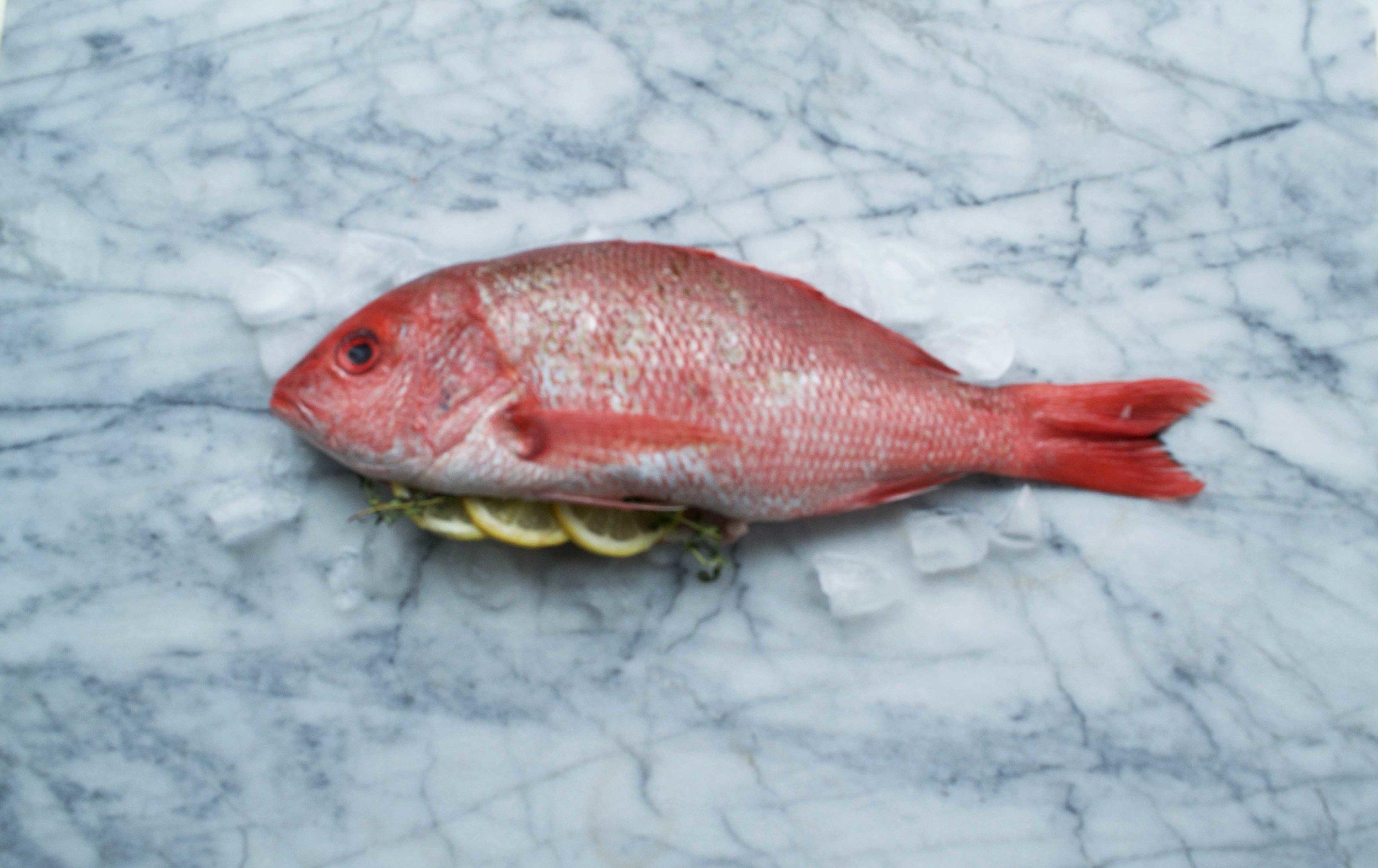 Fish & Mollusks -