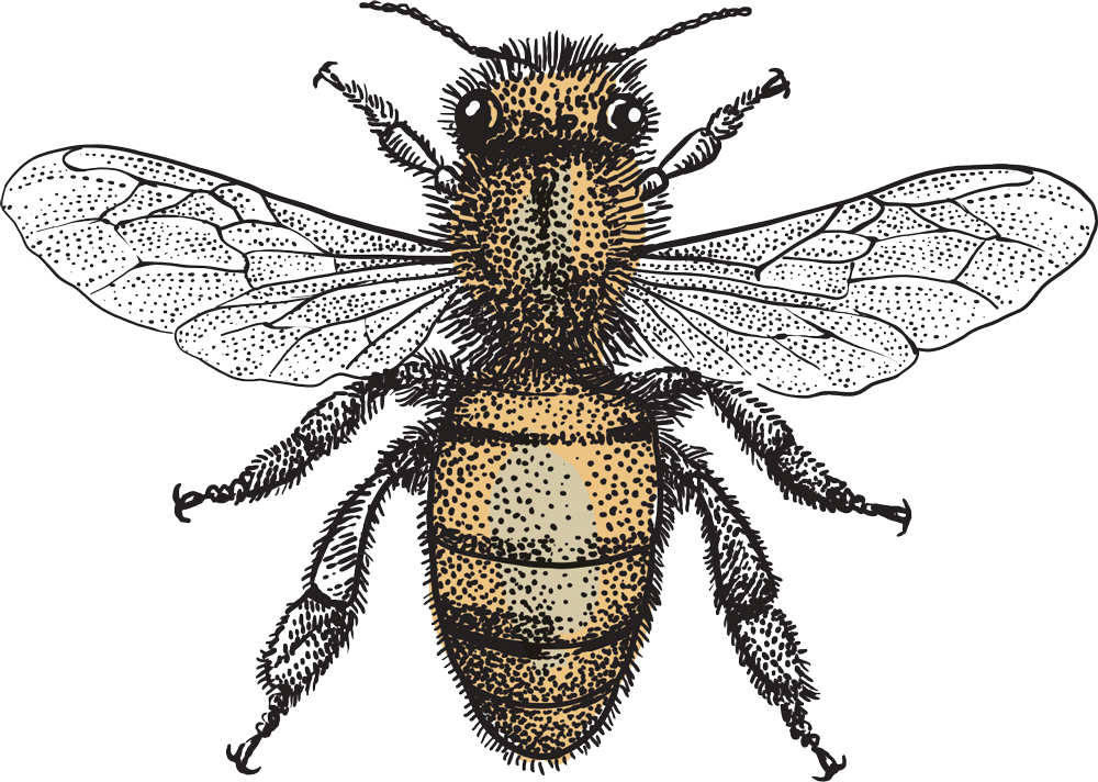 MNH-bee-only-NEW-CROPPED.png