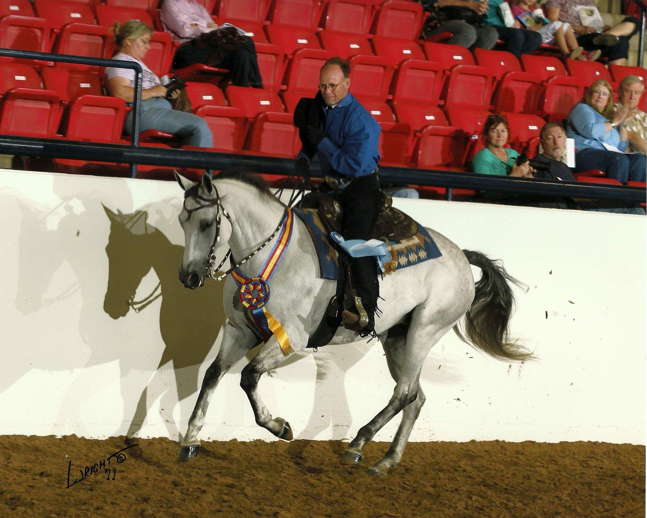 Western Champ Andy 2011.jpg