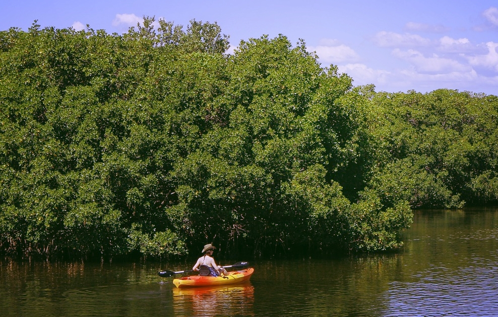 At Sanibel's Bowman's Beach, paddlers can enjoy a tranquil journey through the mangroves.