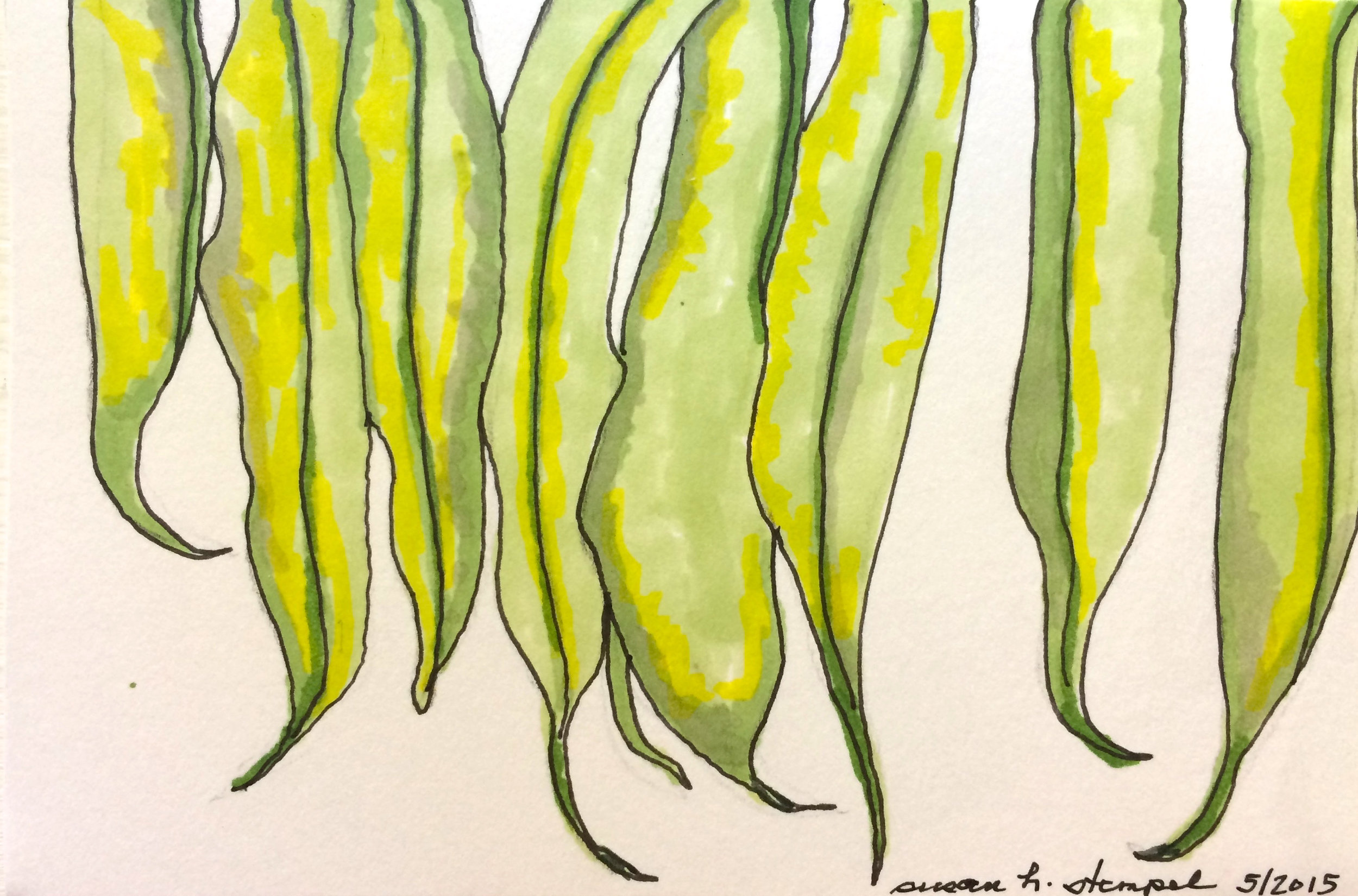 "SOLD ""4"" x 6"" pen & ink on paper.  ""Hanging beans:"""