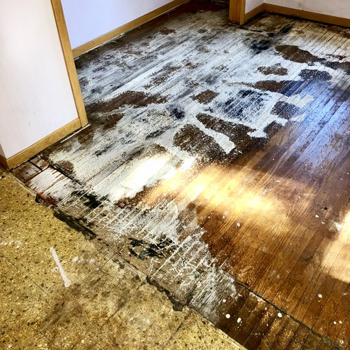 Cat Astrophic Odors Biosweep Of Nebraska, How To Get Urine Out Of Laminate Flooring