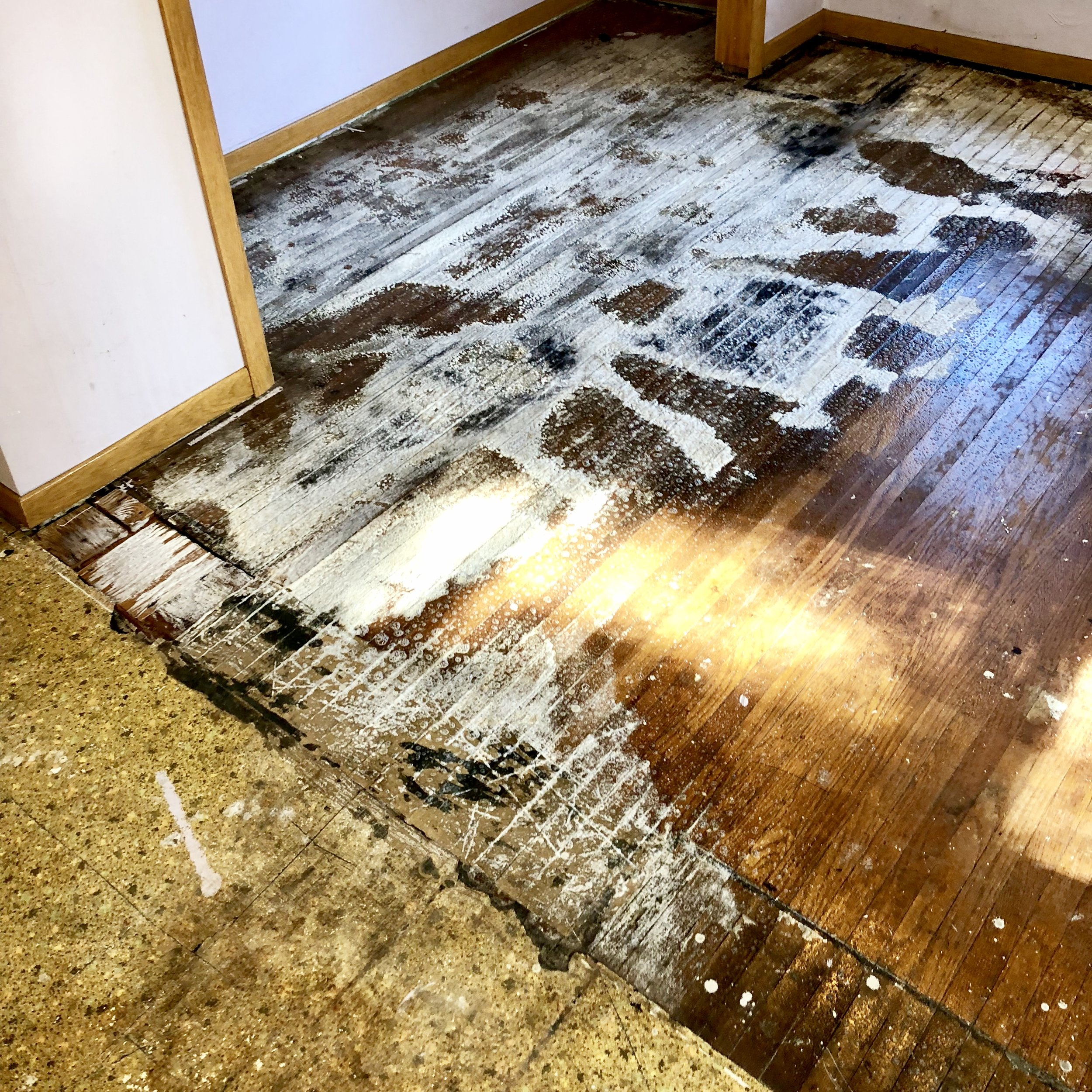 Biosweep in action. - Check out our oxidative cleanser foaming cat urine out of a soiled floor. Material rises to the surface where it oxidizes and is then vacuumed up.