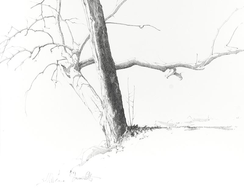 petty-Drawing 1.jpg