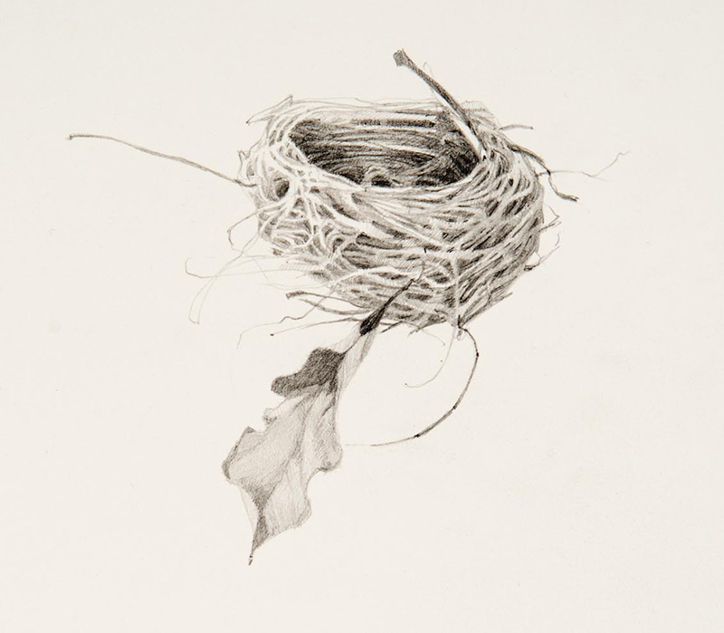 """Susan Petty, """"Nest I,"""" graphite, 10×11 in."""