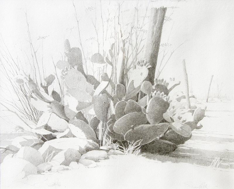 Fence Line Cactus