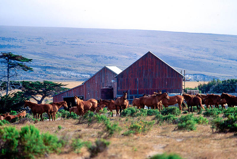 Horses and Barns, Ste. Rosa