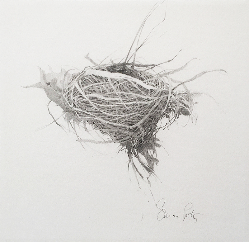 Susan Petty,  Nest IV,  graphite, 9×10 in.