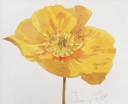 Susan Petty,  Yellow Iceland Poppy,  watercolor, 4.75×6 in.