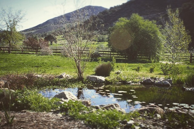 A green spring on the ranch. Click on our profile link to reserve your retreat. #ponds #pleinairpaintinglocations #pleinairretreat #retreats #ArtsRetreat #travel #CentralCoast #PaintersRetreat #WritersRetreat #CaliforniaRanches #CaliforniaCentralCoast #Ranches #Vacations #VacationDestination #VacationIdeas #offthebeatenpath #retreatyourself #Getaway #explore #CreativeRetreat #renew #create #findyourselfoutside #secluded #california #californiastyle #sanluisobispocounty