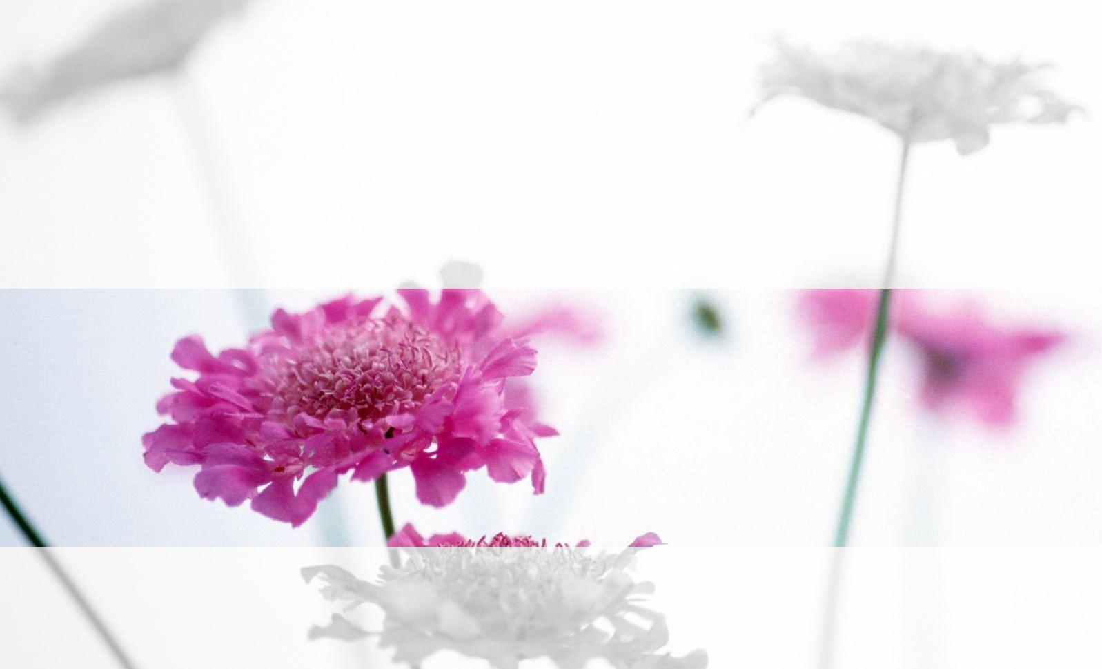 Flower_fade3.JPG