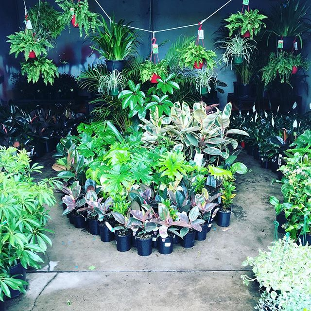 choosing-your-plants.jpg