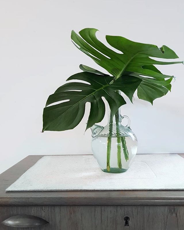 How great are Monstera leaves??? These are some left overs elegantly shoved in a vase - thanks for the photo @sjk999 🌿