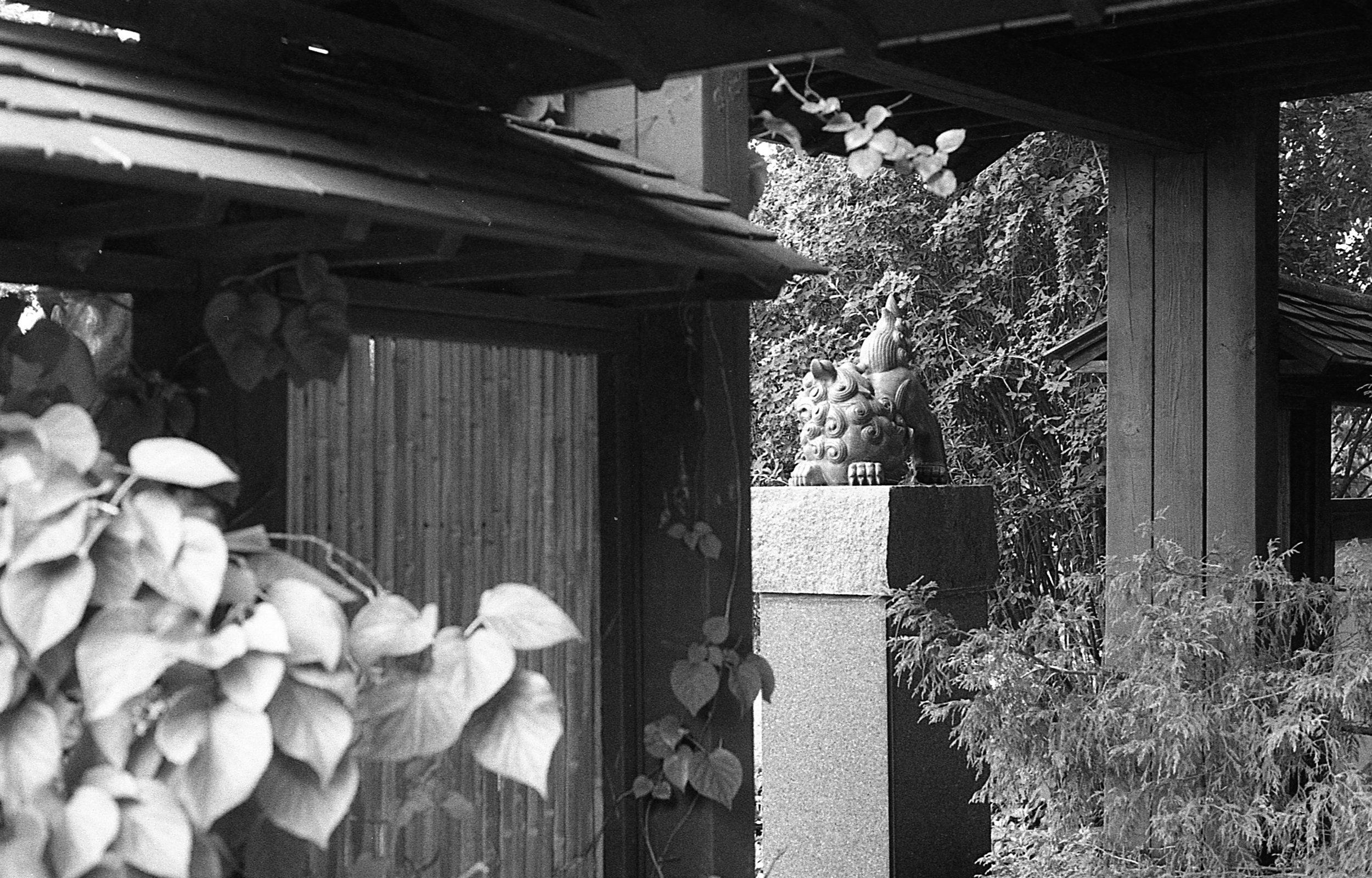 1981 Minolta X-700 Photo 35mm Film Zoe Kissel MSU Campus East Lansing Garden