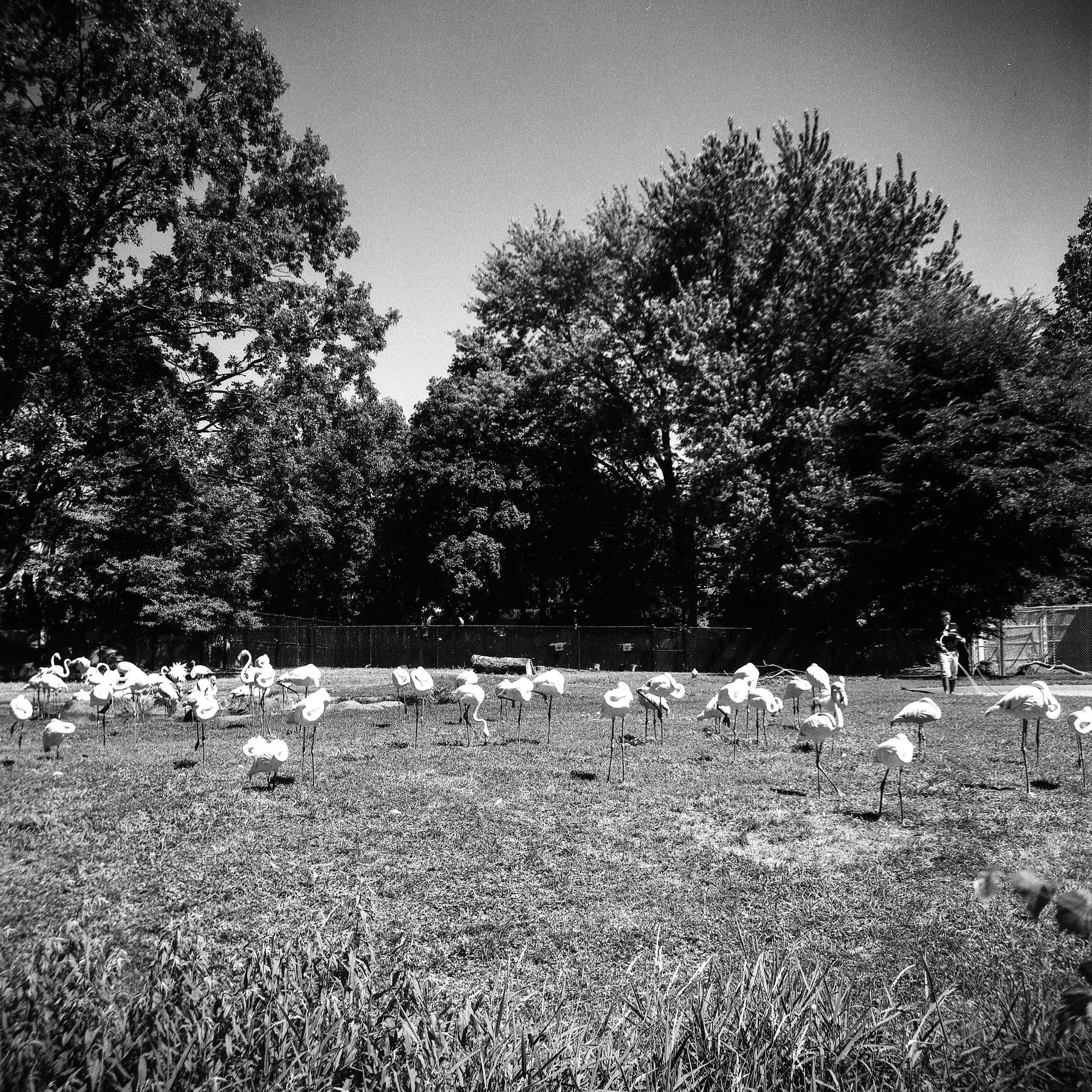 1956 Kodak Duaflex IV Photo Medium Format 620 Film Zoe Kissel Photo detroit zoo