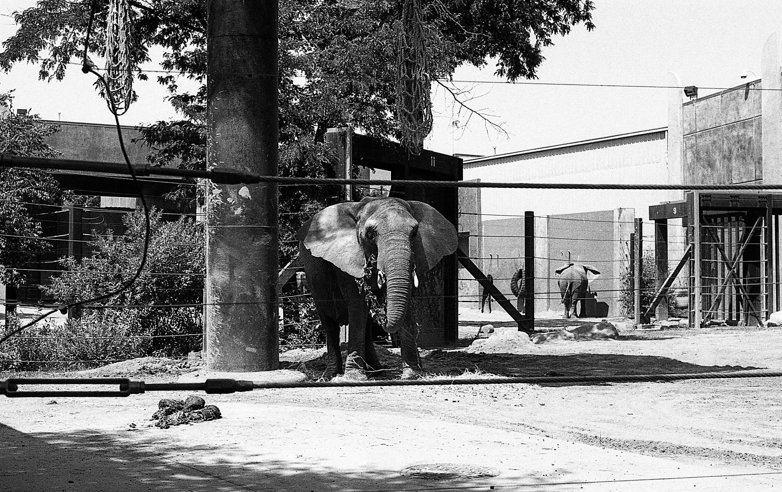 1981 Minolta X-700 Photo 35mm Film Zoe Kissel toledo zoo