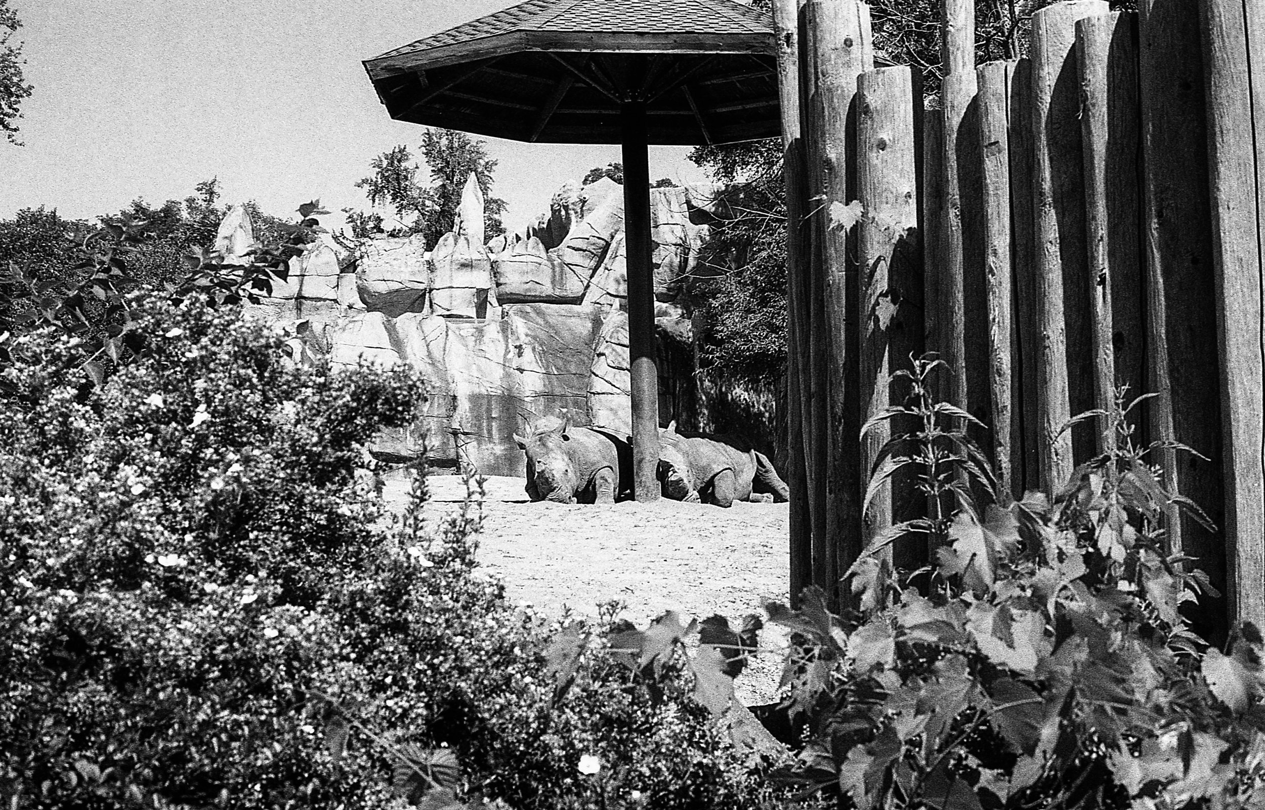 1981 Minolta X-700 Photo 35mm Film Zoe Kissel detroit zoo michigan