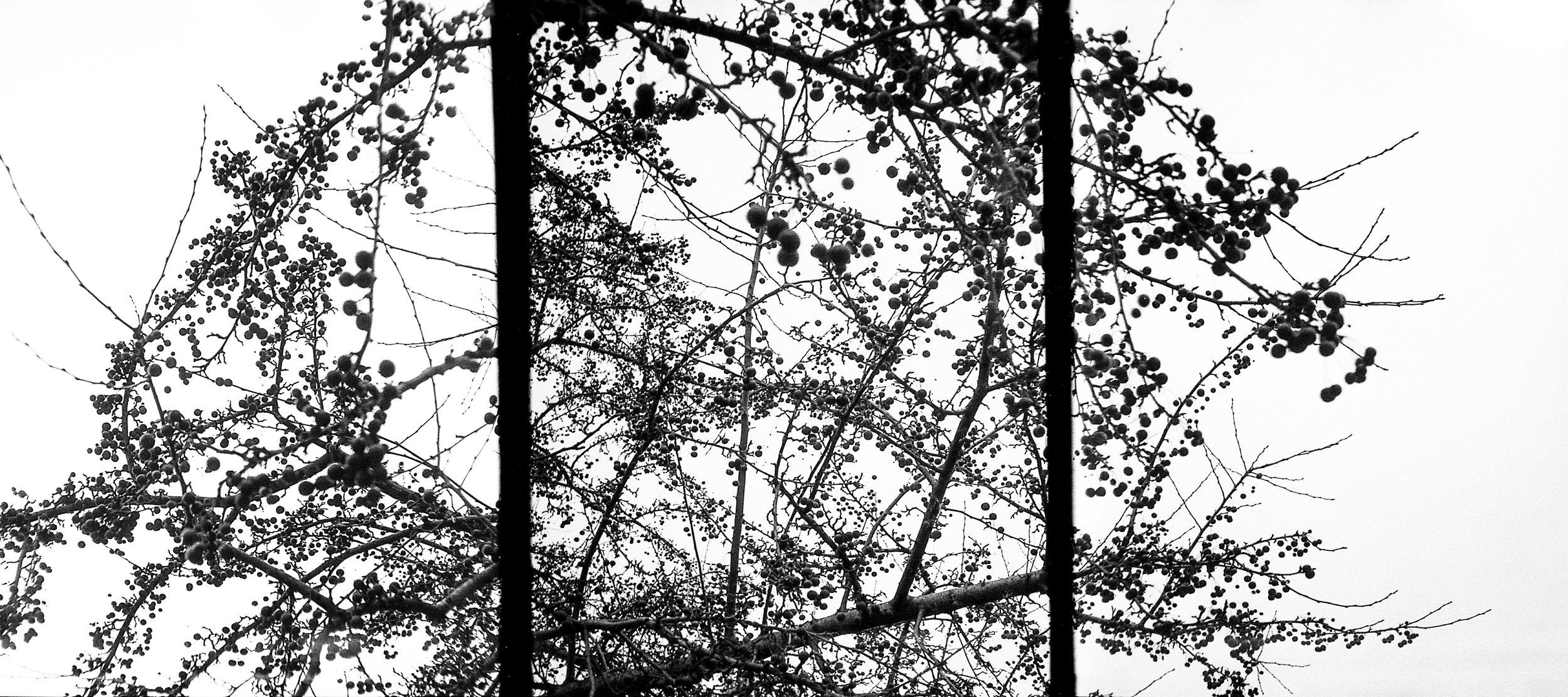 35mm_Edit_016.jpg