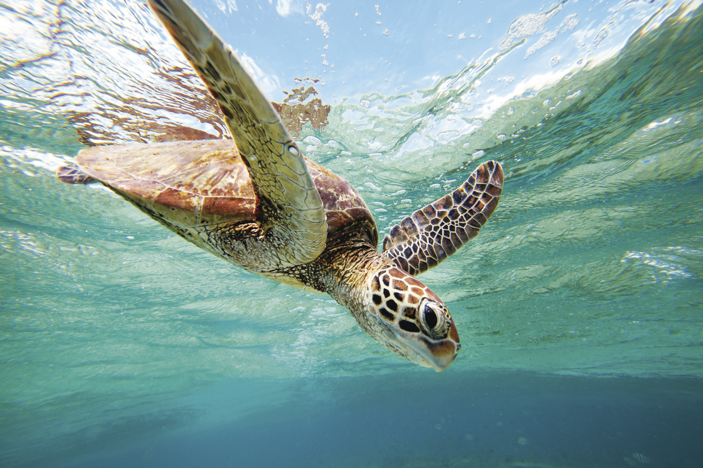 Rescue your own turtle -