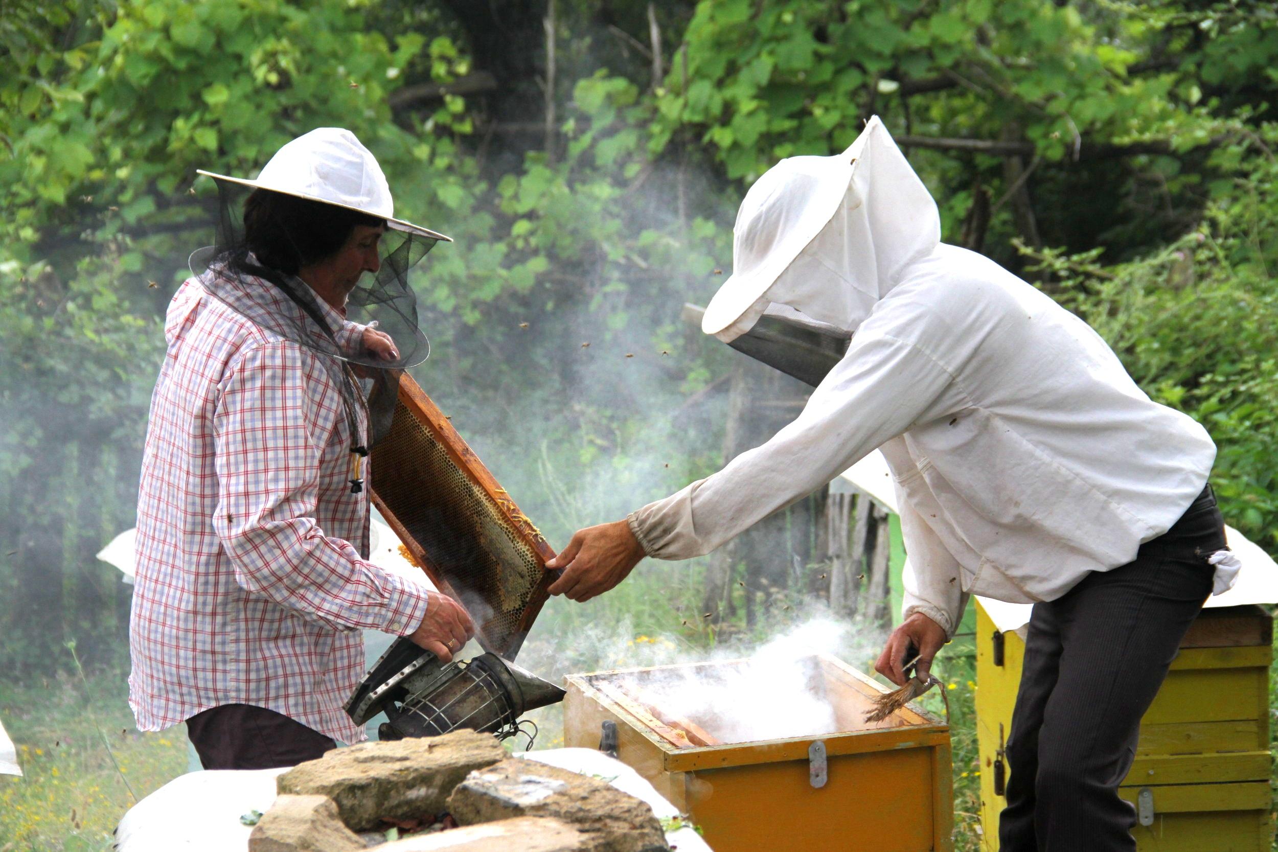 Beekeepers that I met whilst walking through Albania.