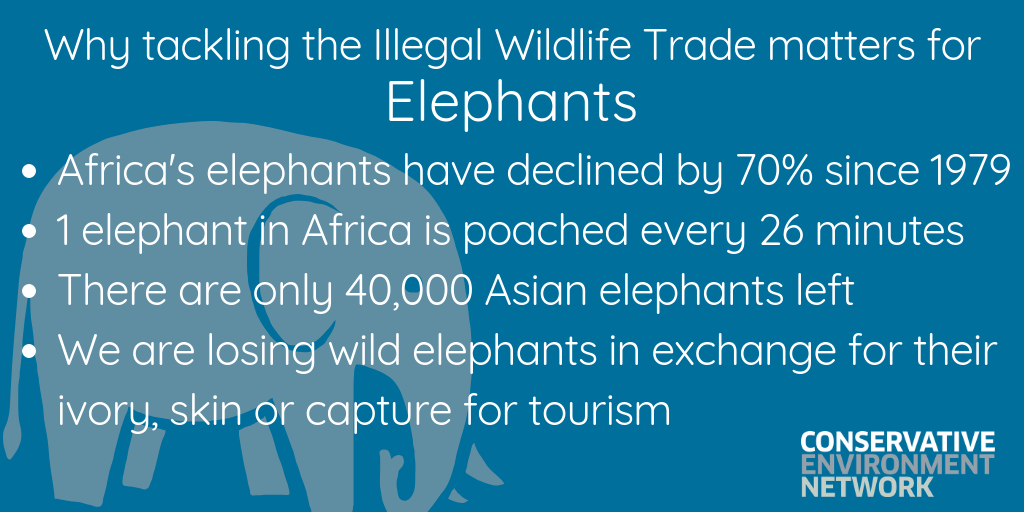 Copy of Why tackling the Illegal Wildlife Trade matters.png