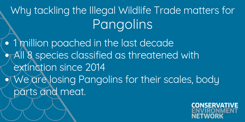 Copy of Copy of Why tackling the Illegal Wildlife Trade matters.png
