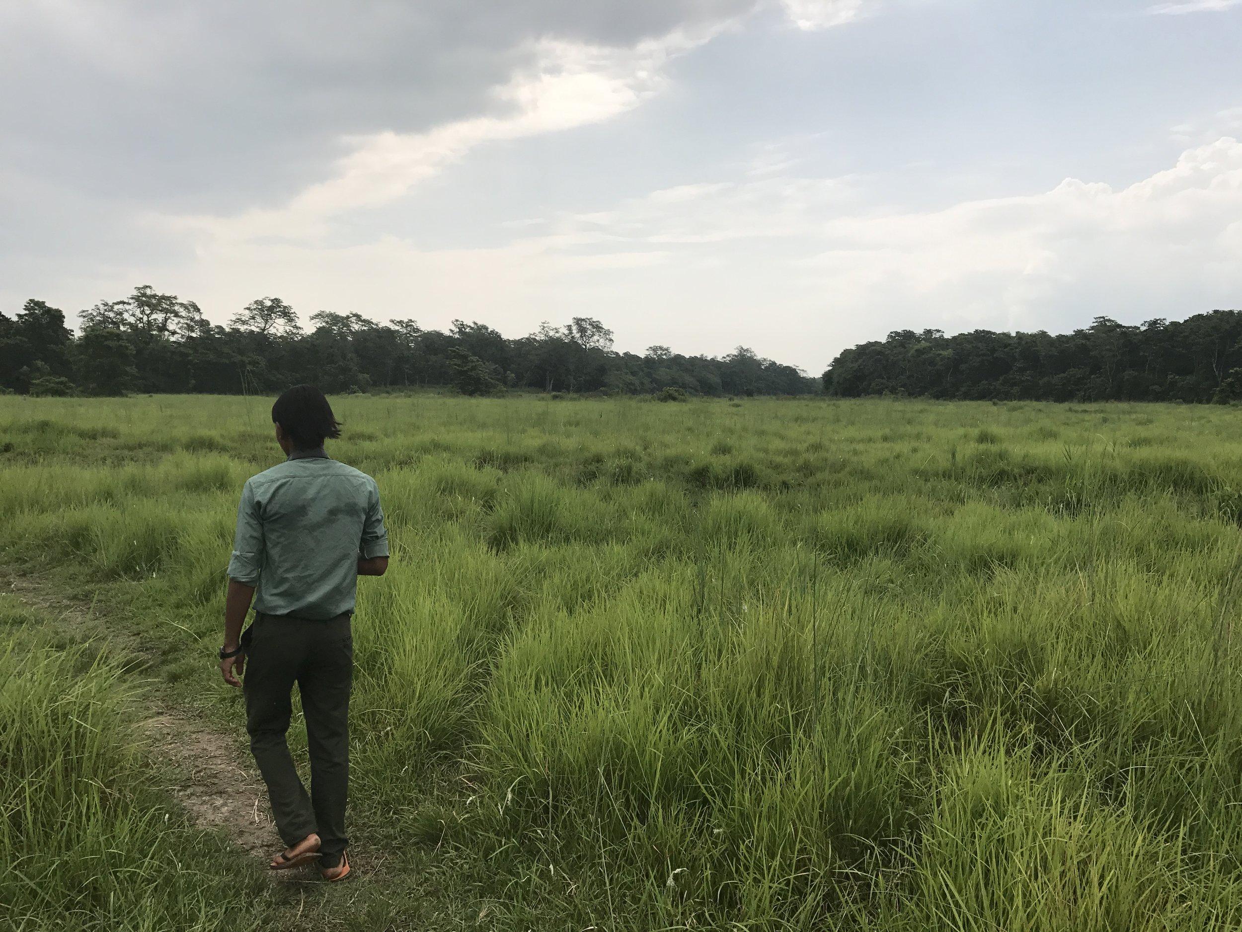 a morning stroll through chitwan national park