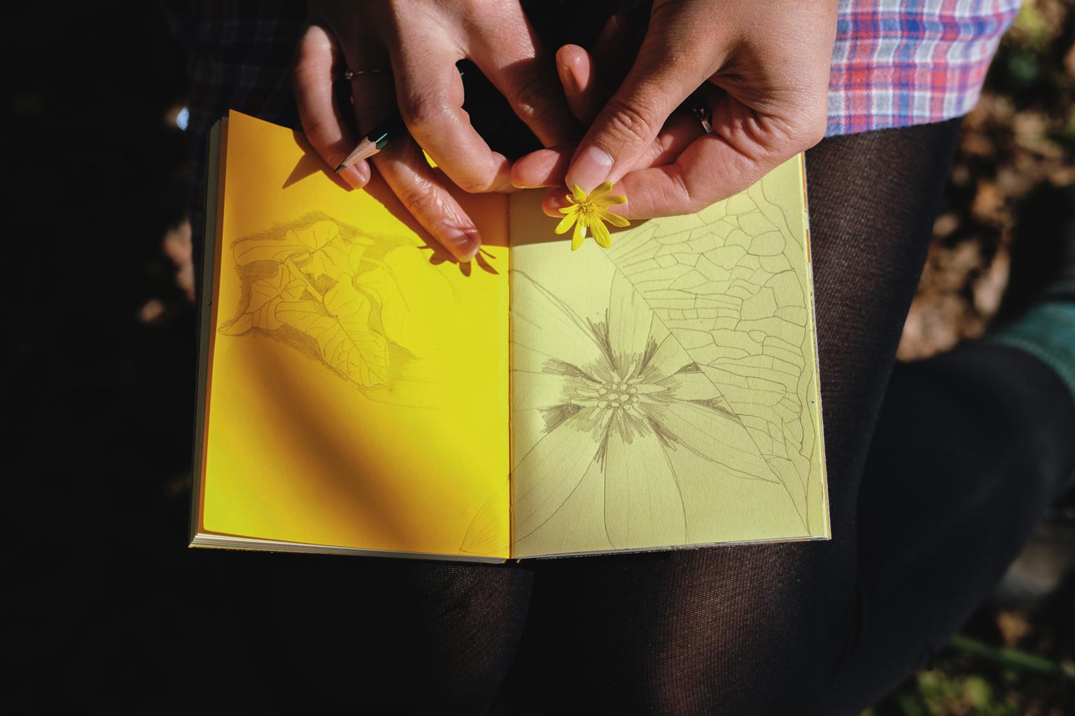drawn_to_nature_11.jpg