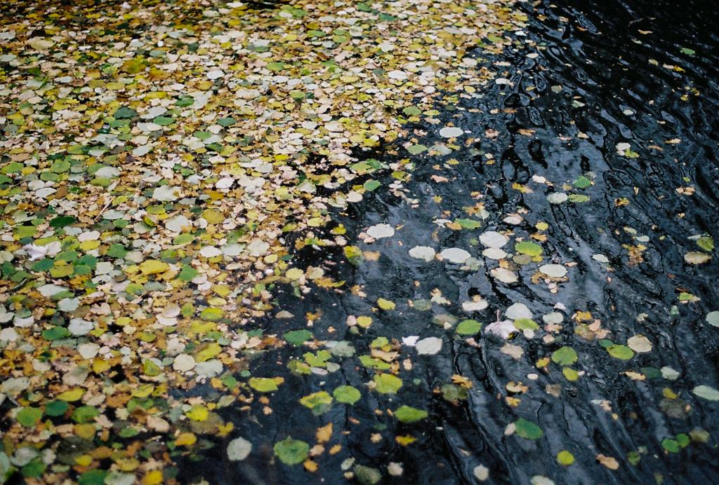 autumn_film_1.jpg