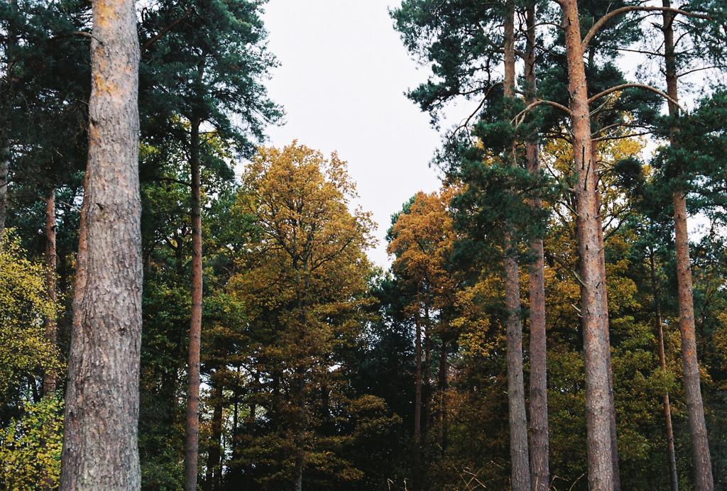 autumn_film_2.jpg