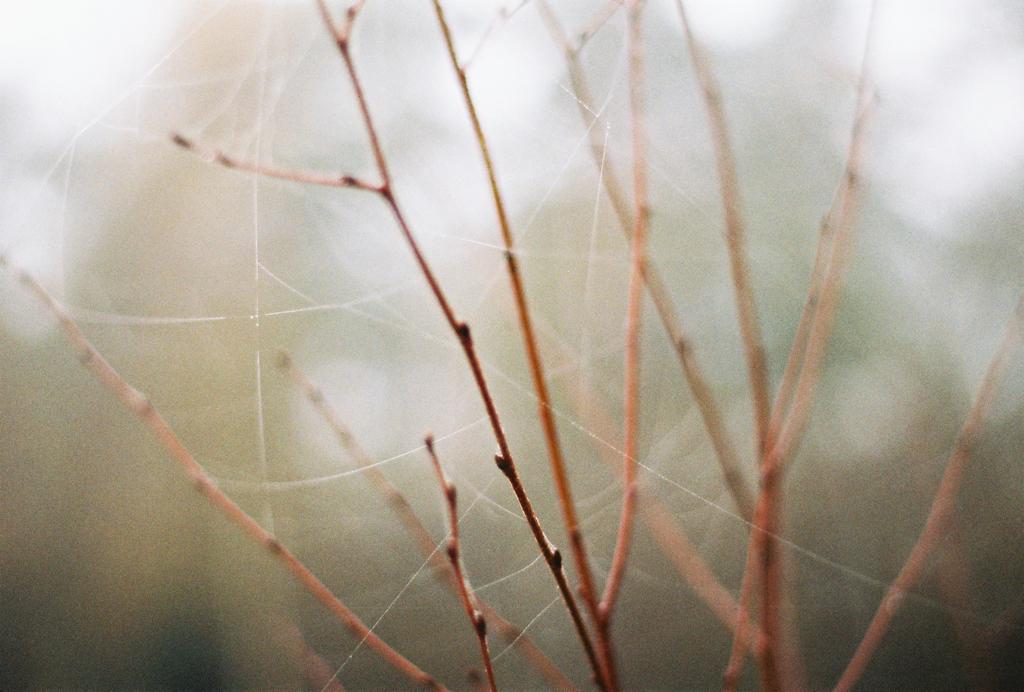 autumn_film_4.jpg