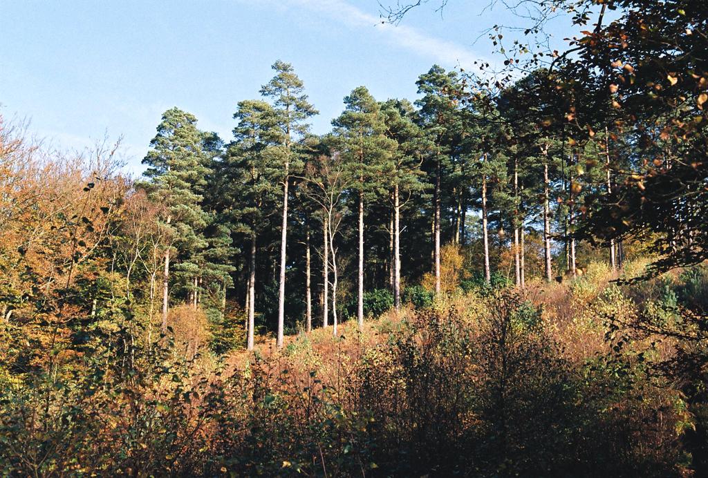 autumn_film_6.jpg