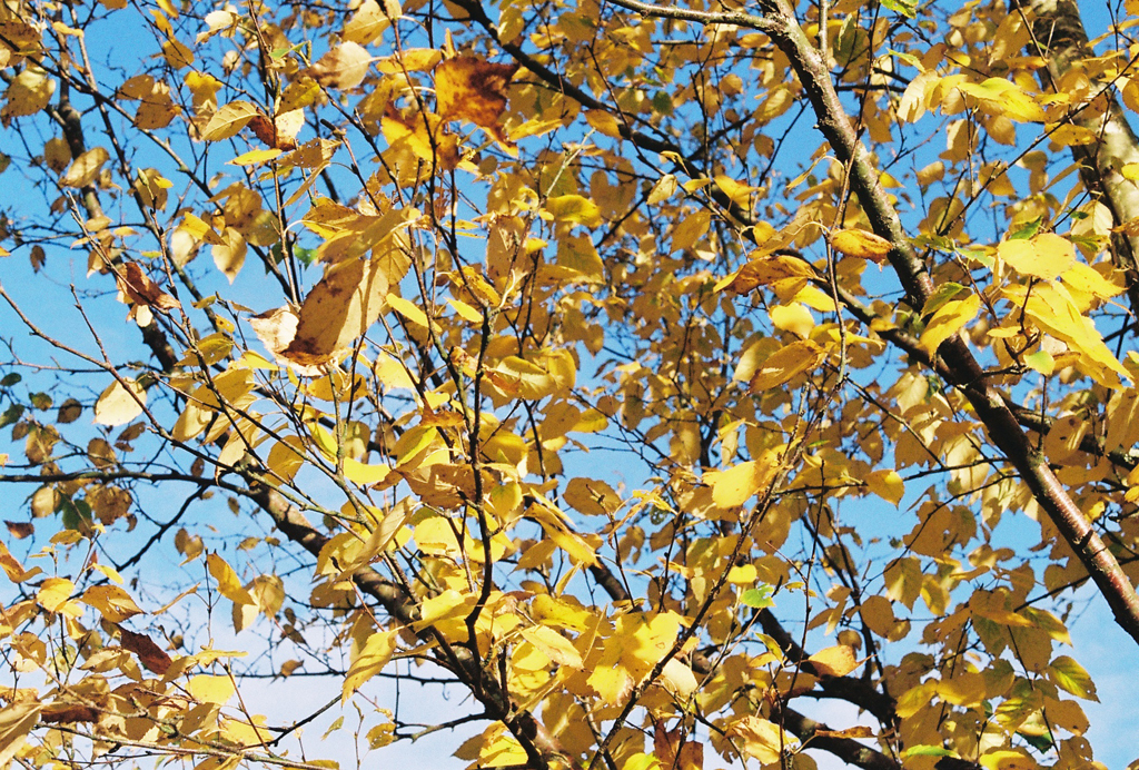 autumn_film_7.jpg