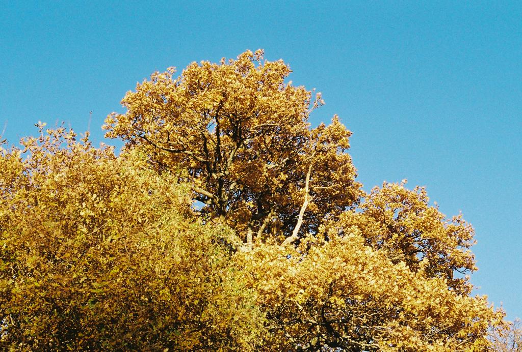 autumn_film_8.jpg
