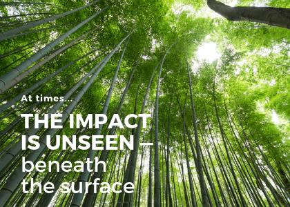 Blog 3.29.19 - chinese bamboo.png