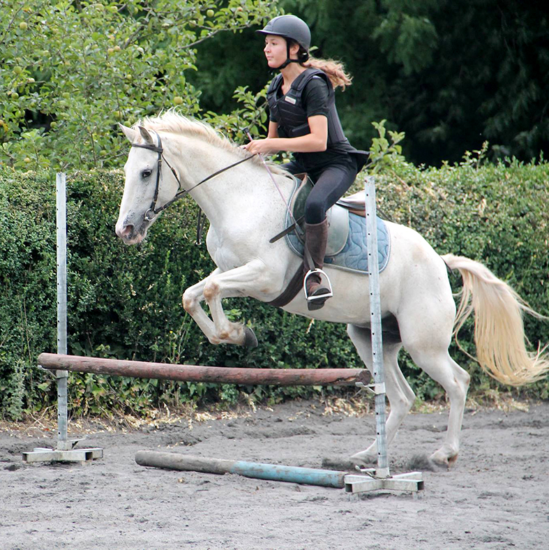 equestrian stay with jumping in France