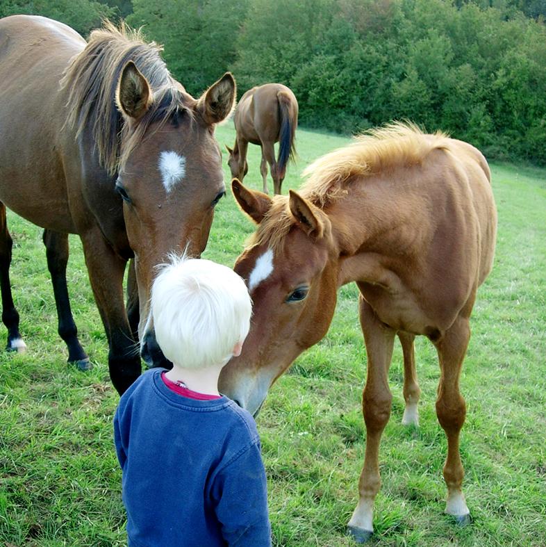 séjours équestres en famille
