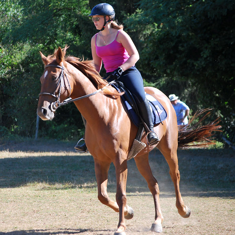 equestrian stay with dressage in France