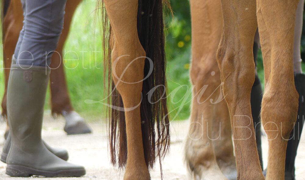 moniteur-equestre.jpg