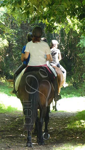 promenade-cheval-adultes.jpg