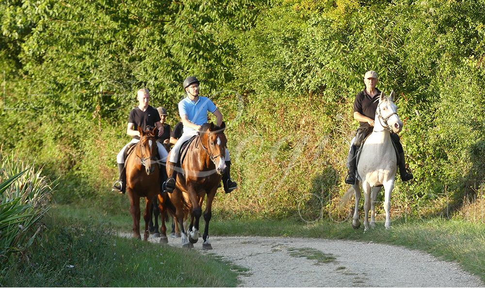 promenade-cheval.jpg