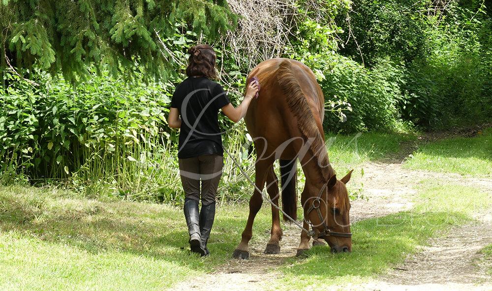 retour-promenade-cheval.jpg