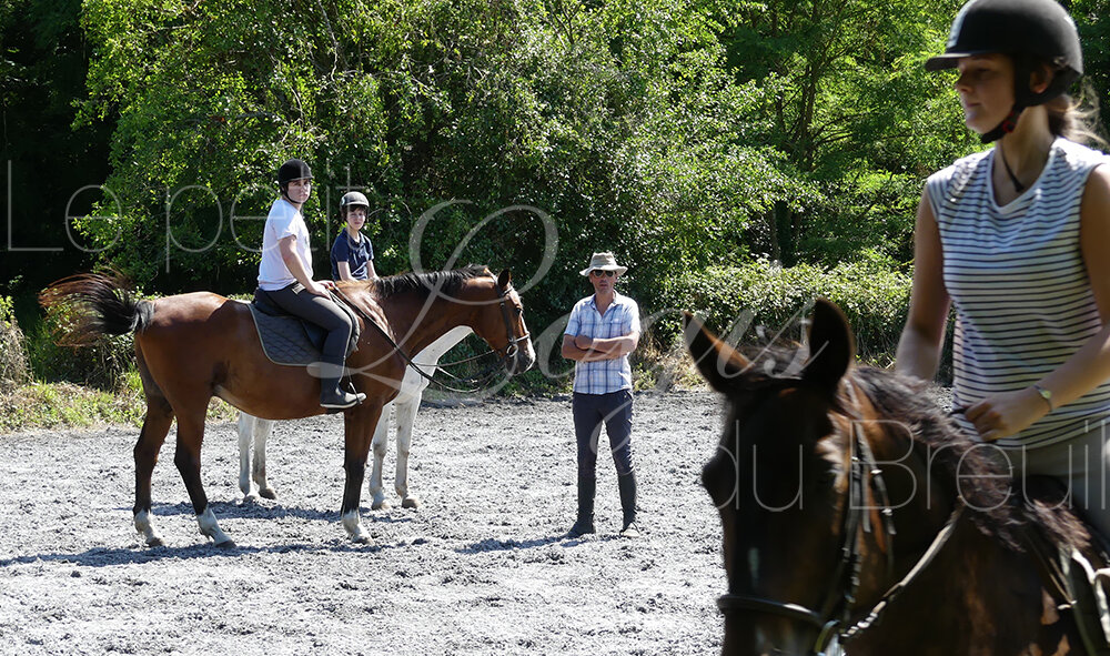 stages-equitation-famille.jpg