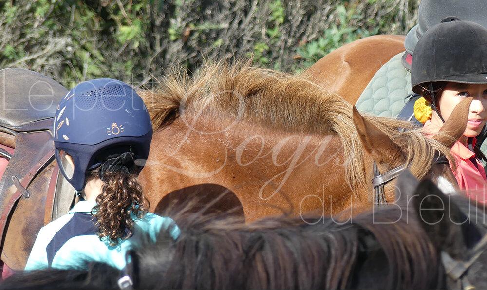 vacances-equitation-poney.jpg
