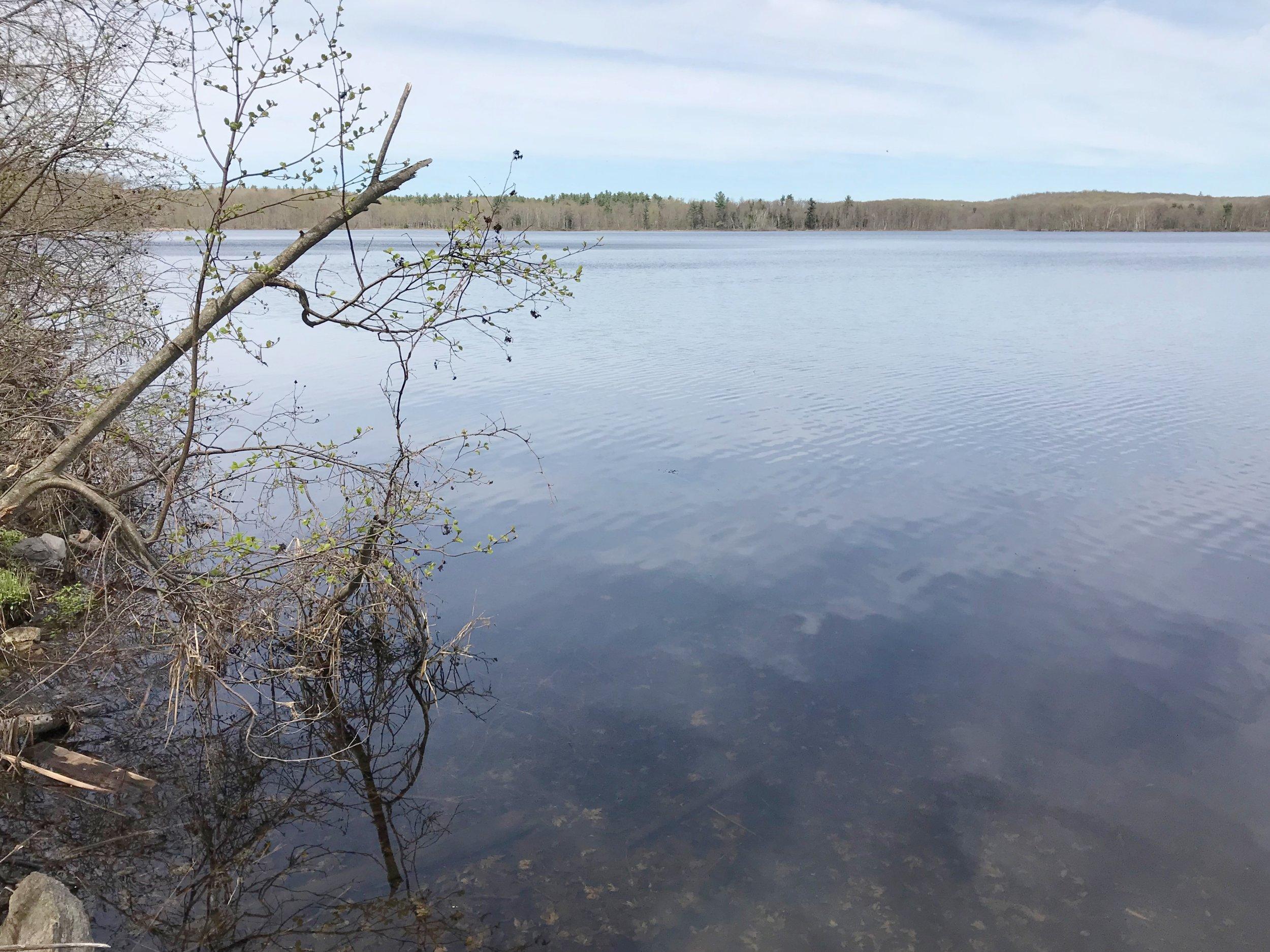 Water Front.jpg