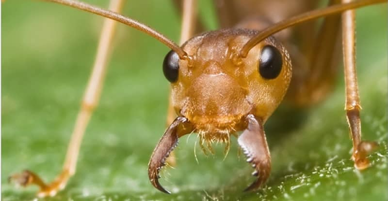 choose-the-best-ant-killer-what-is-more-effective-an-ant-trap-bait-or-a-poison.jpg