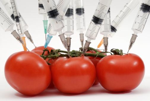 tomatestransgenicos3.jpg