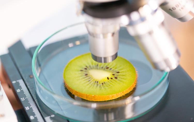 pros-contras-alimentos-transgenicos.jpg